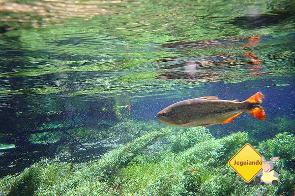 Flutuação no Rio da Prata. Jardim, Mato Grosso do Sul. Imagem: Erik Pzado