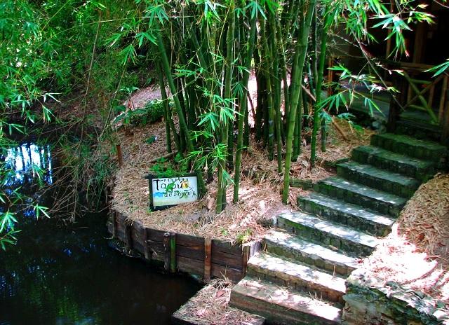 Acesso para o lago, onde vivem os gigantescos pirarucus. Imagem: Janaína Calaça