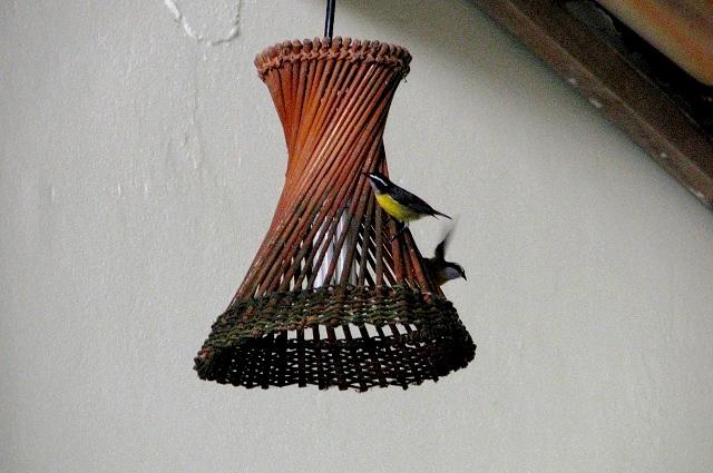 Passarinhos na luminária. Imagem: Janaína Calaça