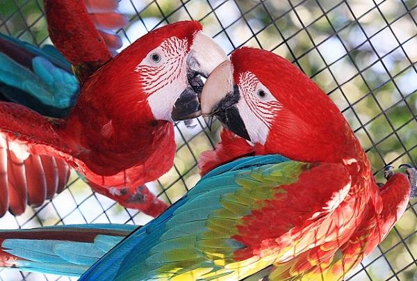 Parque das Aves. Foz do Iguaçu, Paraná. Imagem: Divulgação