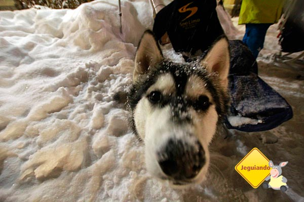 Sun Peaks é totalmente pet friendly! Imagem: Erik Pzado