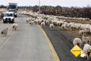 Na estrada, rumo a Torres del Paine. Imagem: Janaína Calaça