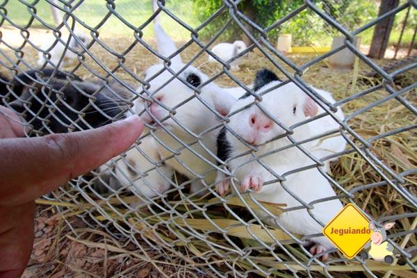 Coelhos e porquinho da índia. Fazendinha do Parador Maritcas Spa Resort. Imagem: Erik Pzado