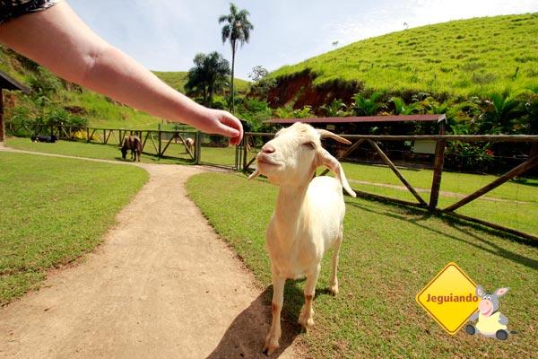 Cabra. Fazendinha do Parador Maritcas Spa Resort. Imagem: Erik Pzado