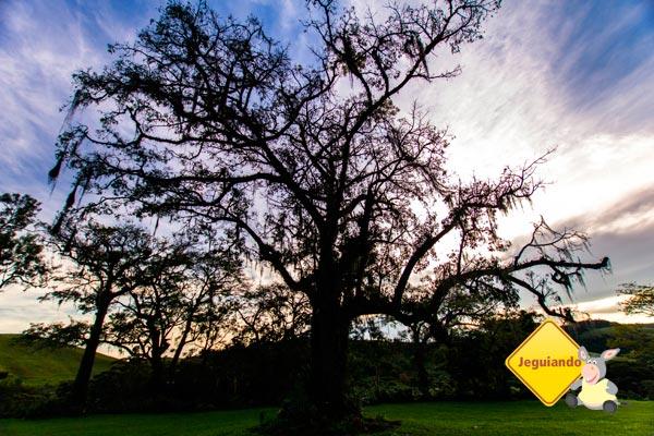 Árvore foi um dos cenários da novela A Viagem. Imagem: Erik Pzado