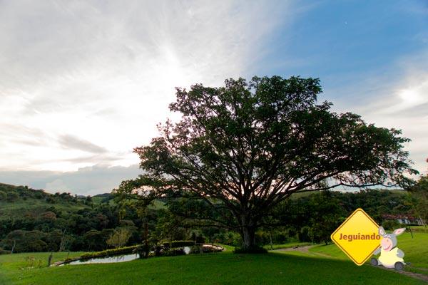 A árvore ao lado do laguinho foi cenário de um dos clipes da Xuxa. Imagem: Erik Pzado