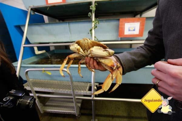 Frutos do mar. Ostras. Mercado Público de Granville Island. Vancouver, BC. Imagem: Erik Pzado