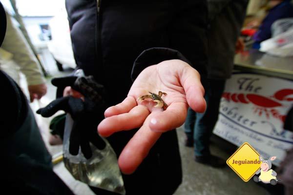 Caranguejos filhotes são devolvidos ao mar, para evitar que a pesca se torne predatória. Imagem: Erik Pzado