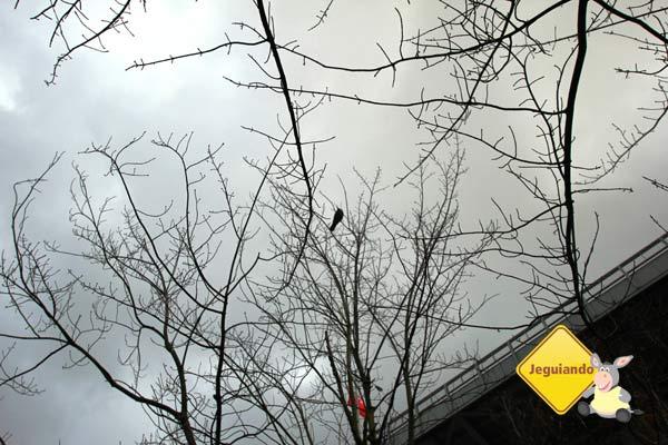 Num dia chuvoso, um canto entre as árvores. Imagem: Erik Pzado