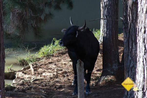 Contato com os animais da fazenda. Hotel Fazenda São Francisco. Cunha, SP. Imagem: Erik Pzado