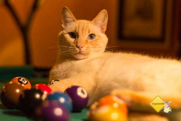 Gatinho, o dono da casa. Imagem: Erik Pzado
