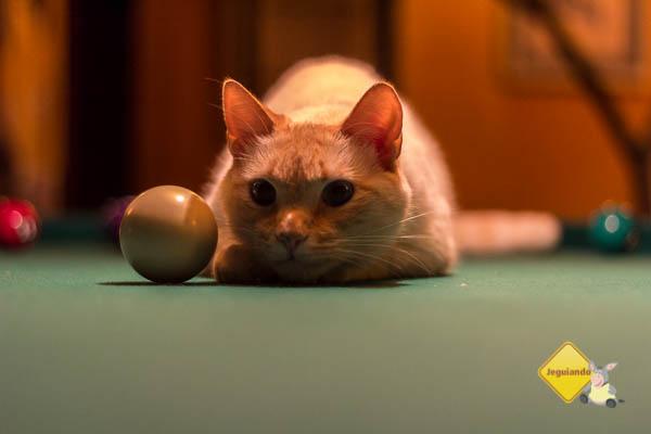 Gatinho, o gato de Gutto e Fabrício. Imagem: Erik Pzado