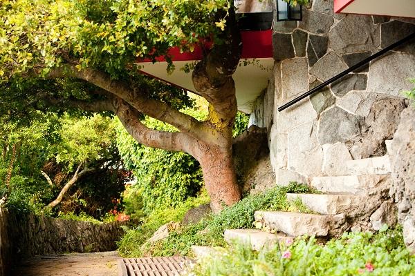 Harmonia entre uma árvore nativa e o Chalé Royal do Hotel Antumalal. Imagem: Divulgação