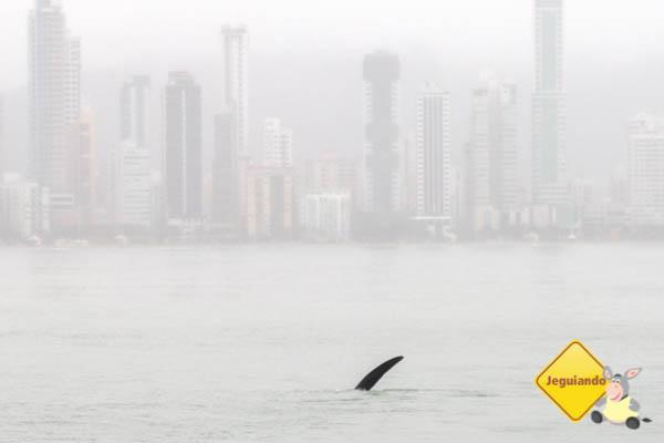 Tchauzinho baleia, até mais. Imagem: Erik Araújo