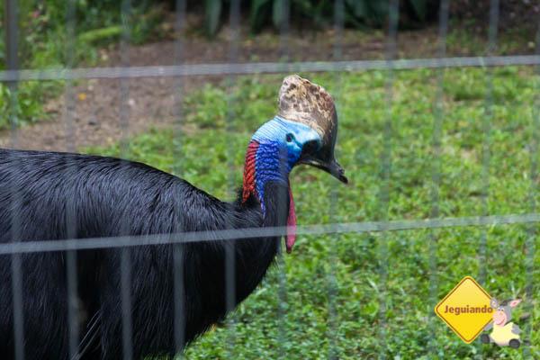 Casuar uma ave bem peculiar. Imagem: Erik Araújo