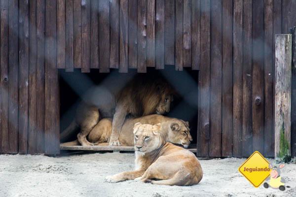 Leoa e leão assanhadinhos ao fundo. Imagem: Erik Araújo
