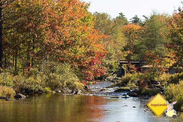 No caminho para Peggy's Cove, as cores já começam a mudar por causa do outono. Imagem: Erik Araújo