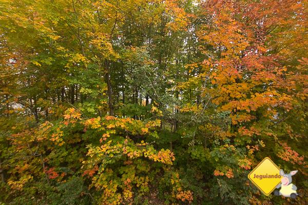 As cores do Outono no Canadá. Imagem: Erik Araújo