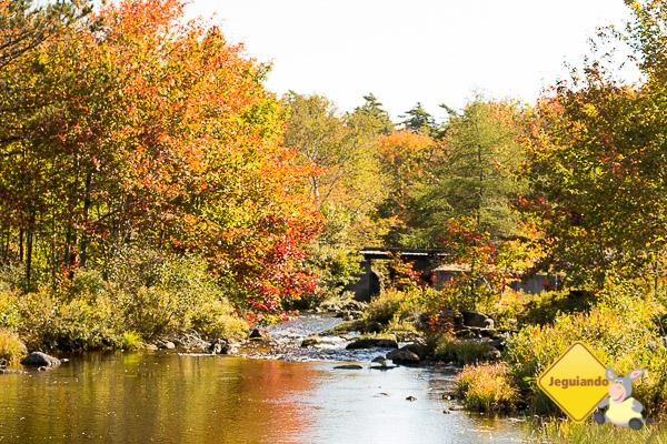 Halifax no outono. Nova Scotia, Canadá. Imagem: Erik Araújo