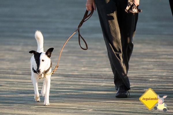 Um tempo para caminhar com seu pet. Imagem: Erik Araújo