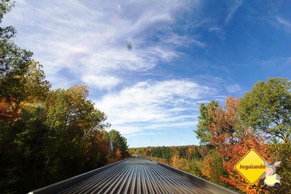 O trem seguindo pelos trilhos no outono. Imagem: Erik Araújo