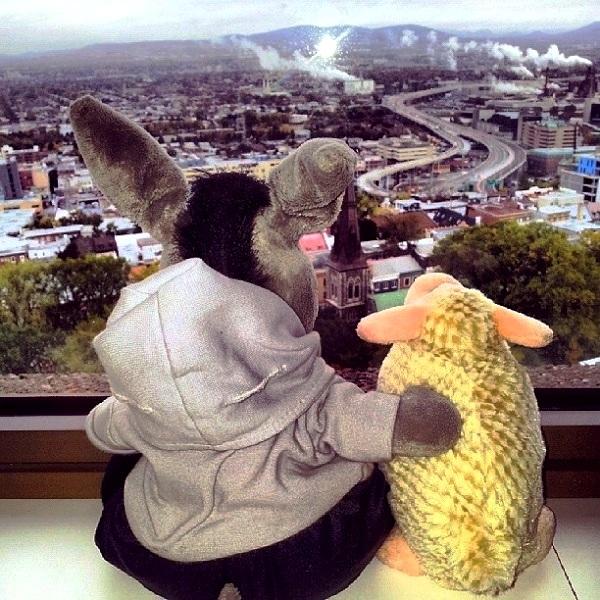 Jegueton e Oveja admirando Quebec City. Imagem: Janaína Calaça