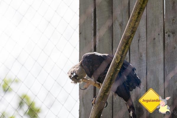 Criadouro Conservacionista do Broa. Imagem: Erik Araújo