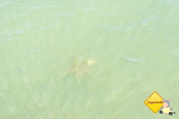 Acredite, é uma tartaruga. Imagem: Erik Araújo