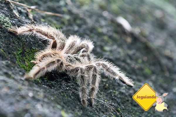 Fauna rica ao redor do Convento da Penha. Imagem: Erik Araújo #DescubraoES
