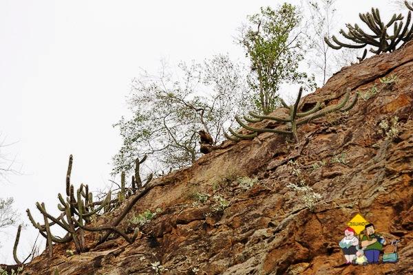Macaco no alto do cânion. Imagem: Erik Araújo
