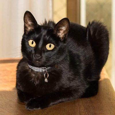 Filó, nossa gatinha. Imagem: Erik Araújo