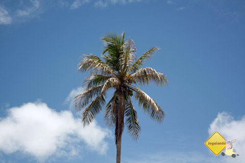 Da faixa litorânea de Salvador ao litoral norte baiano, o visitante encontrará praias de características distintas para todos os gostos. Imagem: Erik Pzado